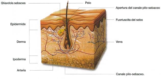 Epilazione Laser - il pelo